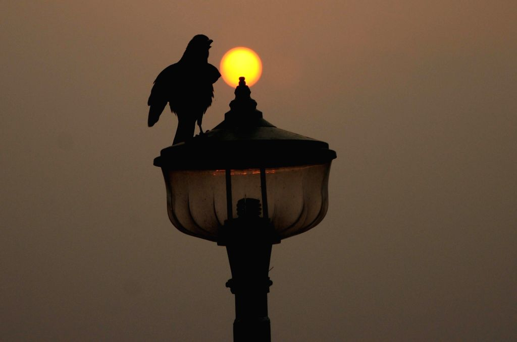 A silhouette crow perches on a street light during sunset in Kolkata, on March 10, 2019.