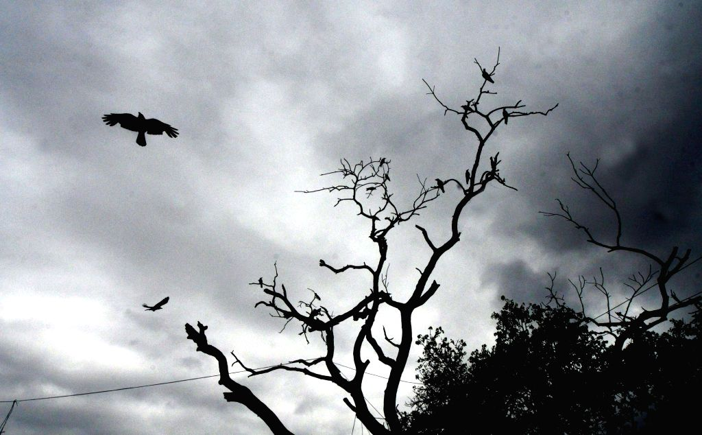 A silhouette of birds sitting on the branches of a leafless tree in the backdrop of dark clouds looming over Patna, on July 24, 2018.