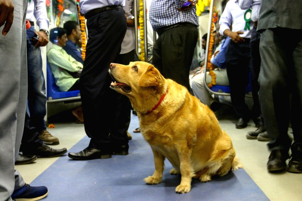 A sniffer dog in Chennai Metro on May 25, 2018.