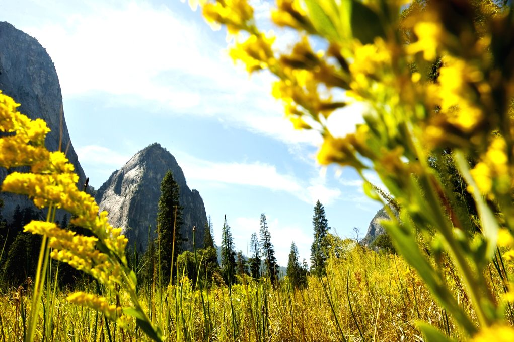 A socially-distanced day-out in California floral blooms.(photo:Ianslife)