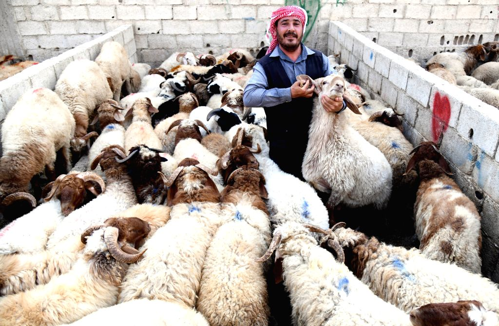 A Syrian man is seen at a livestock market in Damascus, capital of Syria, on July 29, 2020. Syrian people are busy making preparations for the upcoming Eid al-Adha, ...