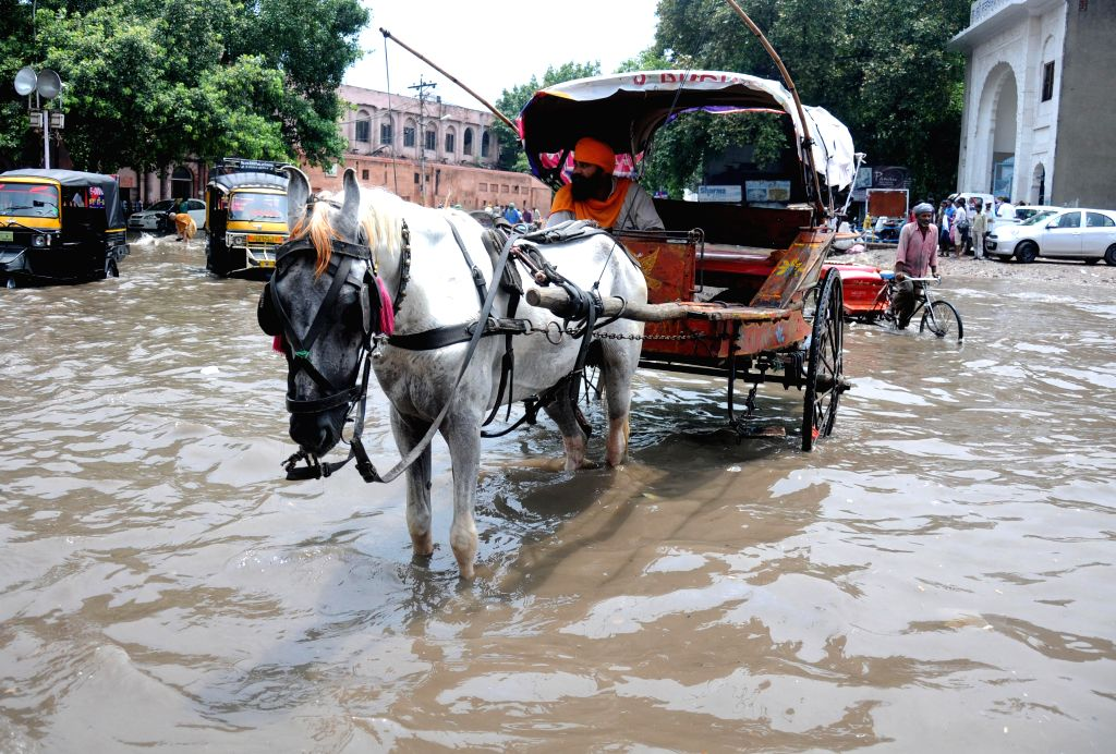 A tanga (a light horse-drawn carriage) on a flooded road of Amritsar after heavy rains on August 1, 2014.