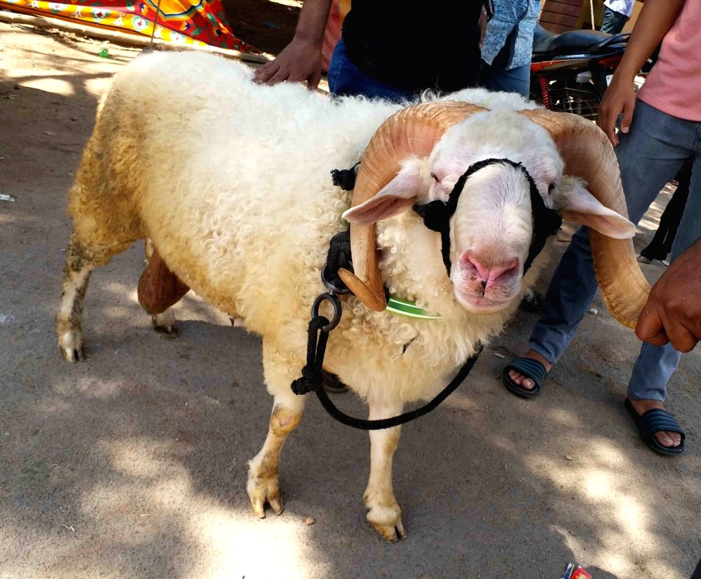 A trader with his sheep at a livestock market ahead of Eid-Ul-Adha celebrations, in Hyderabad on July 30, 2020.