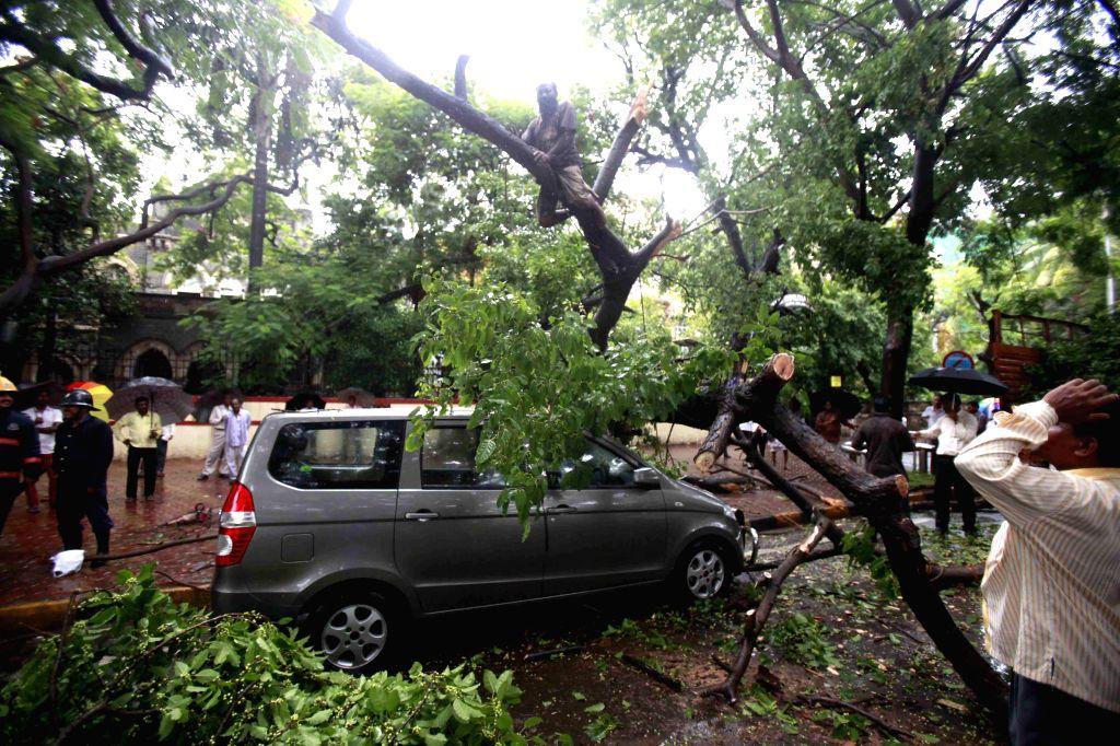 A tree falls on a road blocking a road near Cama Hospital in Mumbai on July 3, 2014.