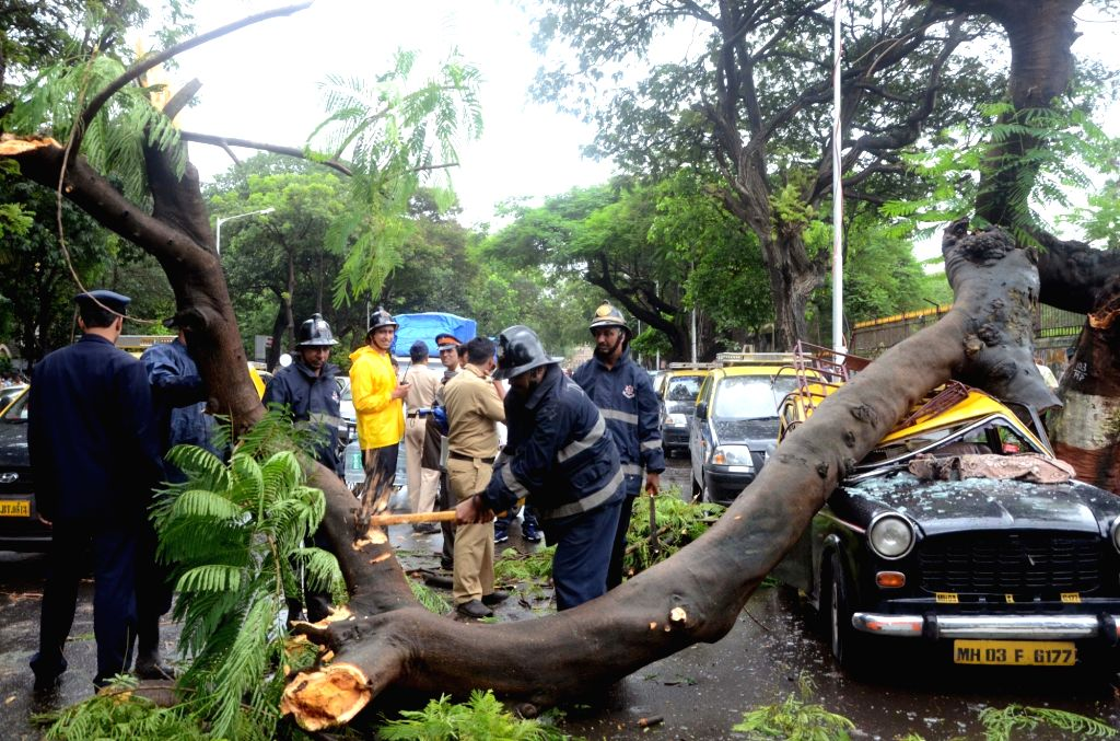 A tree that got uprooted due to heavy rains crushes a car parked under it at Mahanagarpalika Road in Mumbai on Aug 2, 2016.