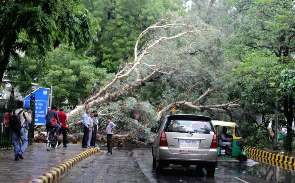 A tree that got uprooted due to heavy rains at a Delhi road on June 21, 2017.