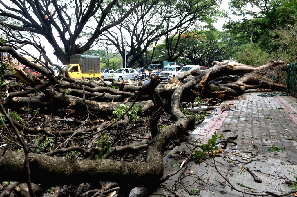 A tree that got uprooted during heavy rains in Bengaluru on May 27, 2017. Heavy rains lashed the city on 26th May.
