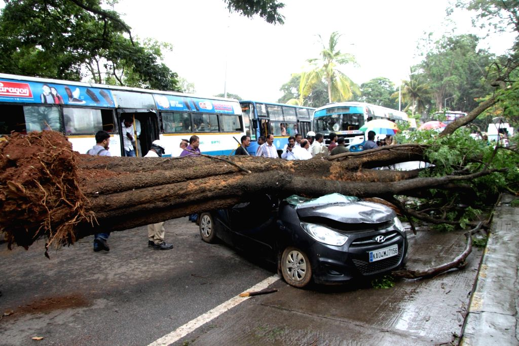 A tree trunk that fell on a car parked under it killing one and leaving the driver of the car severely injured in Bengaluru, on June 27, 2016.