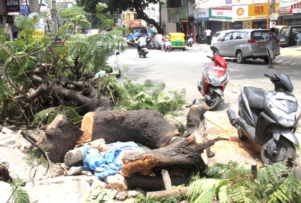 A tree uprooted in Manjunath Nagar due to heavy rains that had lashed Bengaluru on Thursday during the extended nationwide lockdown imposed to mitigate the spread of coronavirus; on Apr ...