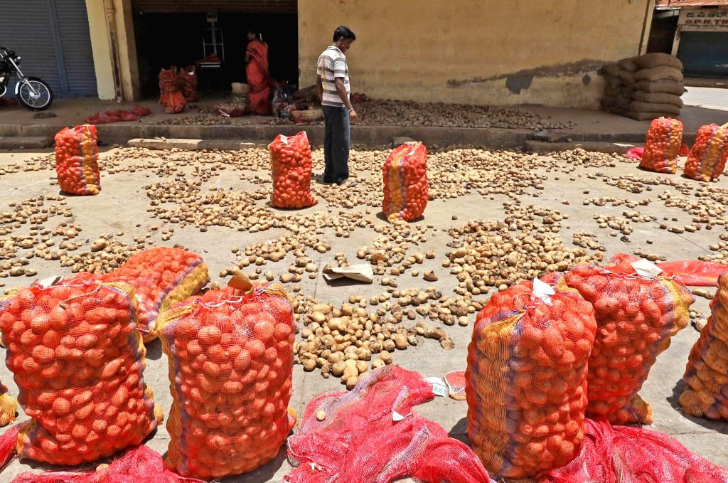 A vendor sorting out potatoes at APMC Yard, Yeshwanthapura  during lockdown in the wake of the 2nd wave of COVID-19, in Bengaluru on Friday 14 May 2021.