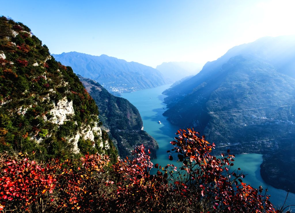 A vessel sails on the Yangtze River in the Three Gorges area in Zigui County, central China's Hubei Province, Nov. 29, 2015, with red leaves seen on the riverside. ...