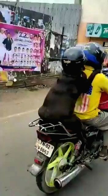 A video clip of a dog wearing a helmet and riding pillion on a motorcycle driven by a man in Tamil Nadu went viral on the Internet, with Twitterati divided over the treatment of the animal in such a way. The clip was shared by a Twitter user with the