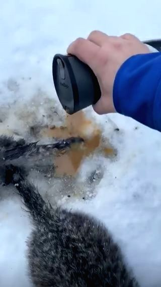 A video of a Canadian man is doing the rounds on the Internet in which he could be seen using a cup of coffee to free three kittens whose tails were frozen to the ground for hours after being ...