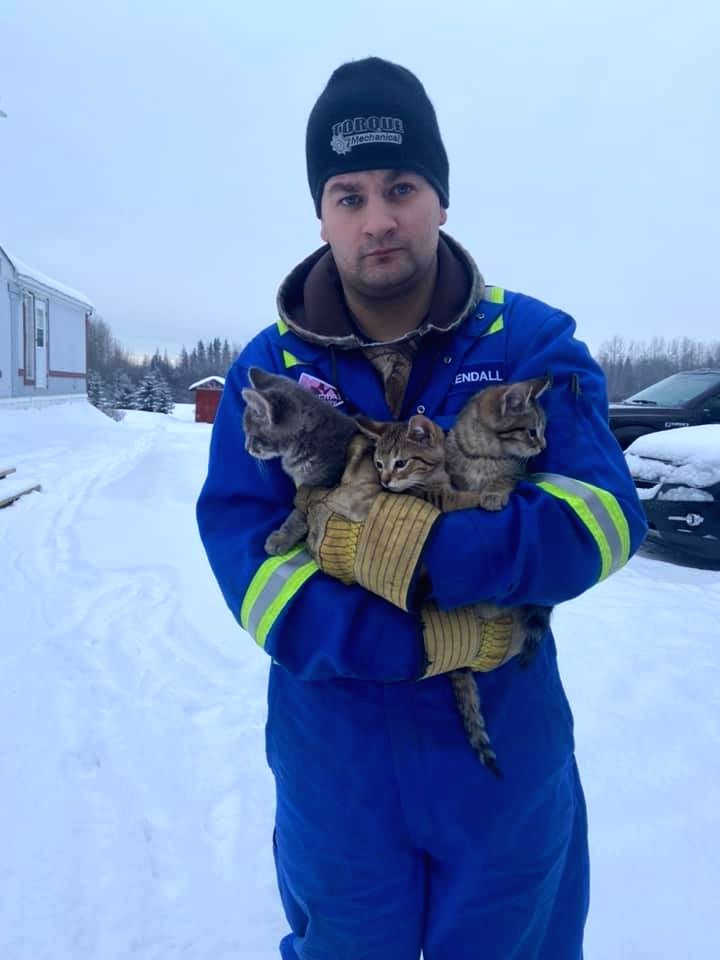 A video of a Canadian man is doing the rounds on the Internet in which he could be seen using a cup of coffee to free three kittens whose tails were frozen to the ground for hours after being abandoned.