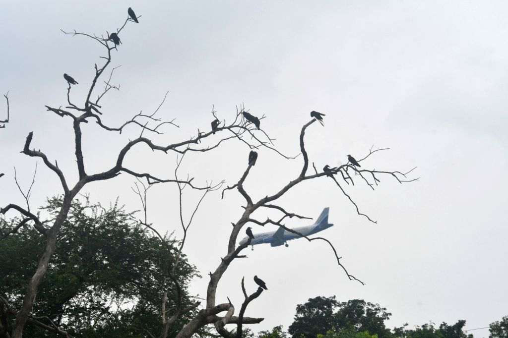 A view of birds sitting on the branches of a leafless tree and an airplane flying past the cloudy skies, in Patna on July 24, 2018.