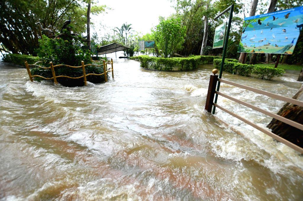 A view of flooded Ranganathittu bird sanctuary following heavy release of water from the Krishnaraja Sagar (KSR) dam after heavy rains near Srirangapatna of Mandya district, Karnataka on Aug ...