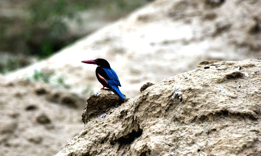 A view of Kingfisher on the banks of river Ganga in Patna on May 10, 2020.