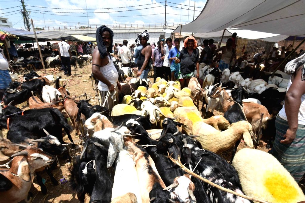 A view of livestock market ahead of Eid-Ul-Zuha, in Patna on Aug 7, 2019.