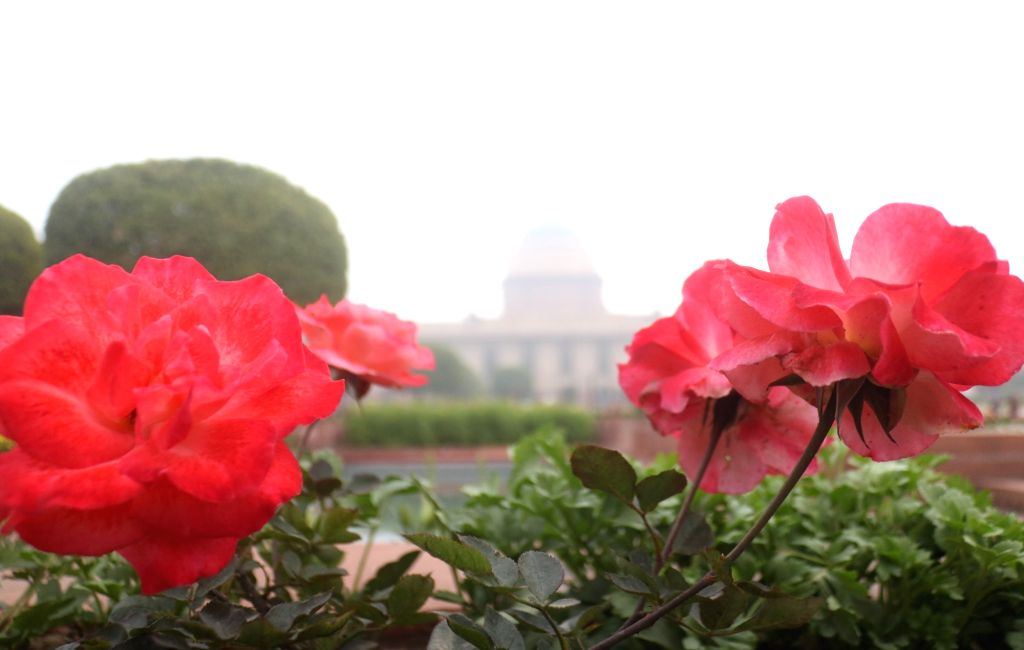A view of seasonal flowers at the Mughal Gardens of Rashtrapati Bhavan during its press preview in New Delhi, on  Feb 2, 2019.
