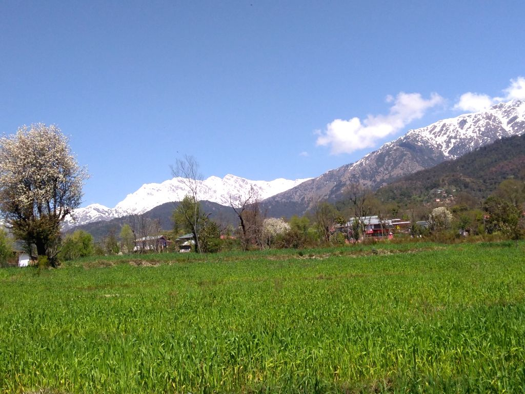 A view of snow capped Dhauladhar Range from Himachal Pradesh's Palampur, on March 26, 2019.