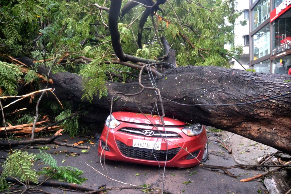 A view of the uprooted trees lying over streets blocking people's passage after rains lashed Bengaluru on Sept 9, 2017.