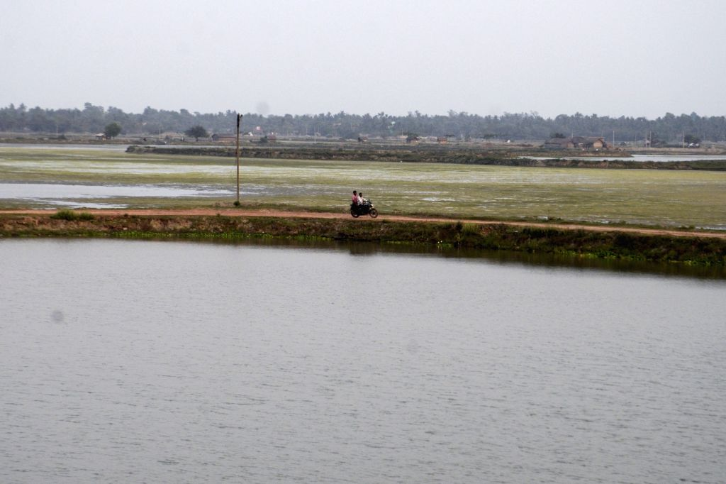 A view wetland situated in East Kolkata on March 22, 2018. March 22 is observed as World Water Day.