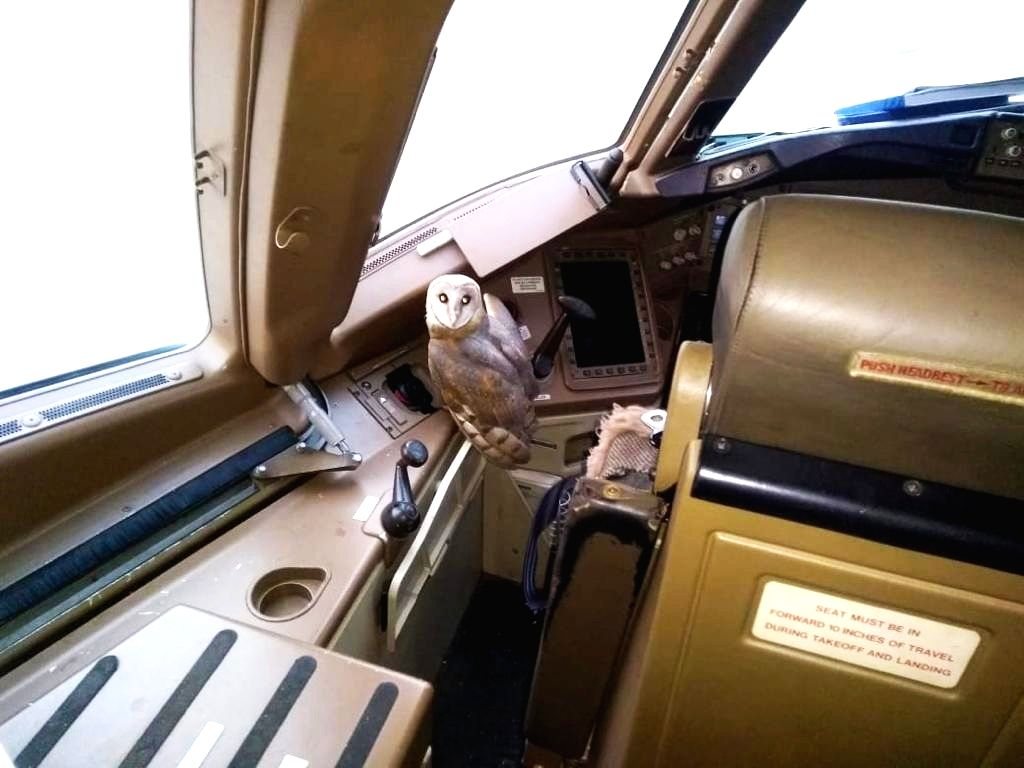 A wide-eyed owl found its way into the cockpit of a Jet Airways Boeing 777 that was parked for the night at Chhatrapati Shivaji Maharaj International Airport.