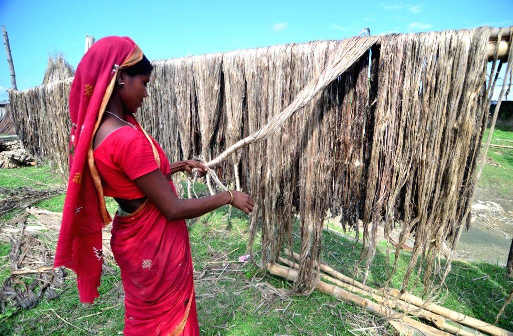 A woman dries sheaf of jute at Palashbari, Assam on Sept 25, 2016.