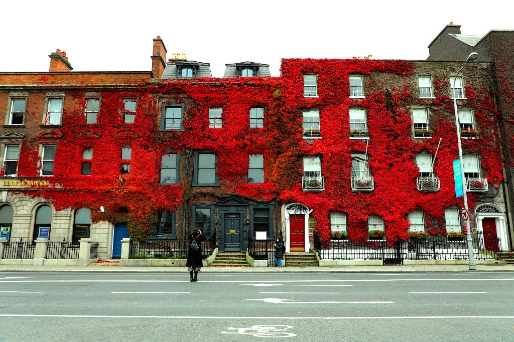A woman takes photos of a building covered with red leaves in Dublin, Ireland, on Oct. 18, 2020.