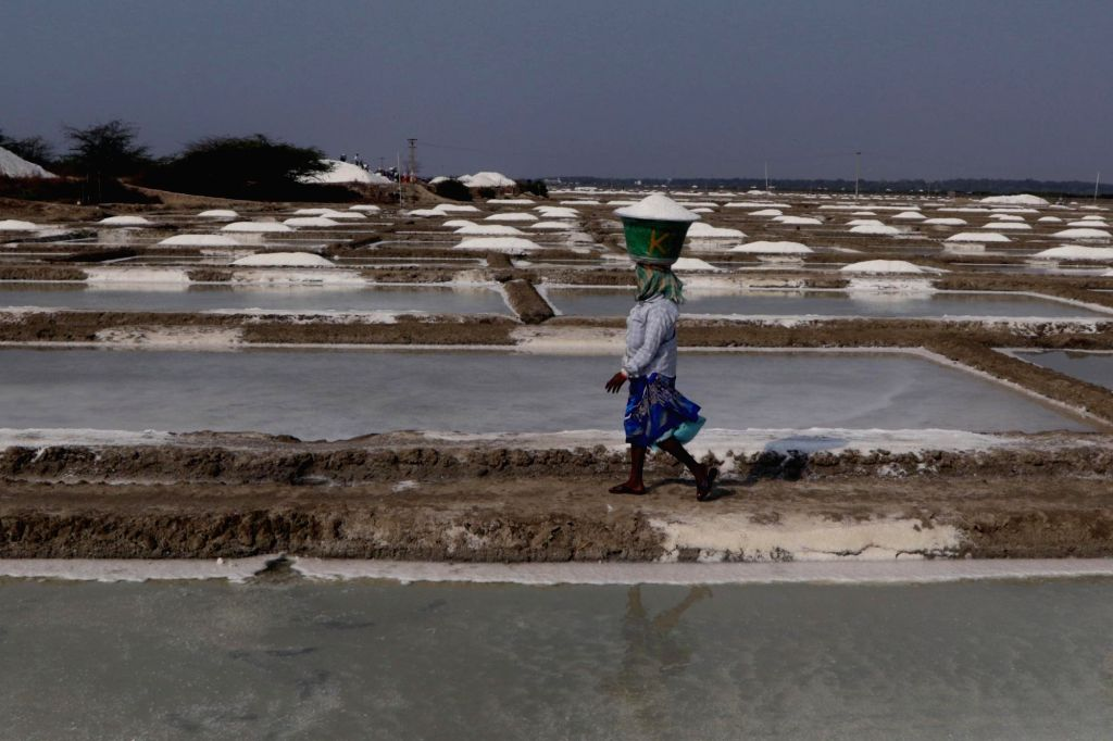 A worker carries salt crystals ready for harvesting, on the outskirts of Chennai, on May 28, 2019.