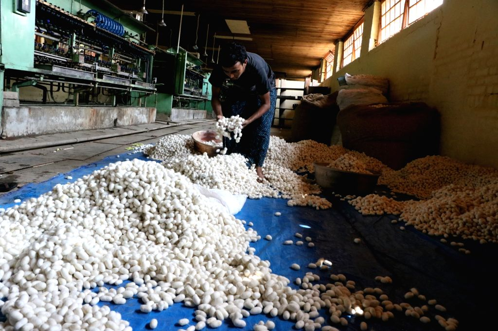 A worker sorts Mulberry cocoons for processing, at a silk factory, in Srinagar on July 26, 2018.