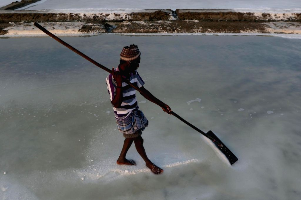 A worker uses a wooden rake to level the ground with high concentration of salt during salt processing, on the outskirts of Chennai on May 28, 2019.