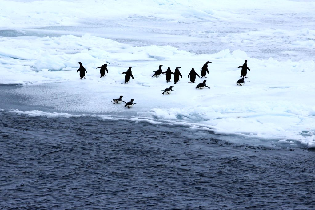 ABOARD XUELONG, Dec. 5, 2017 - Penguins are seen as China's research icebreaker Xuelong, or Snow Dragon, sails in the Antarctic Circle, Dec. 4, 2017. Xuelong has entered the Antarctic Circle as of ...