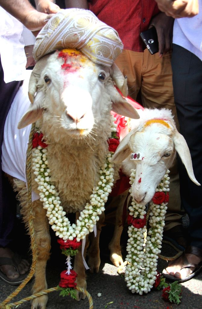 Activists of Kannada Chalavali Vatal Paksha marrys off a pair of sheeps in favour of Valentine's Day in Bengaluru on Feb 14, 2018.