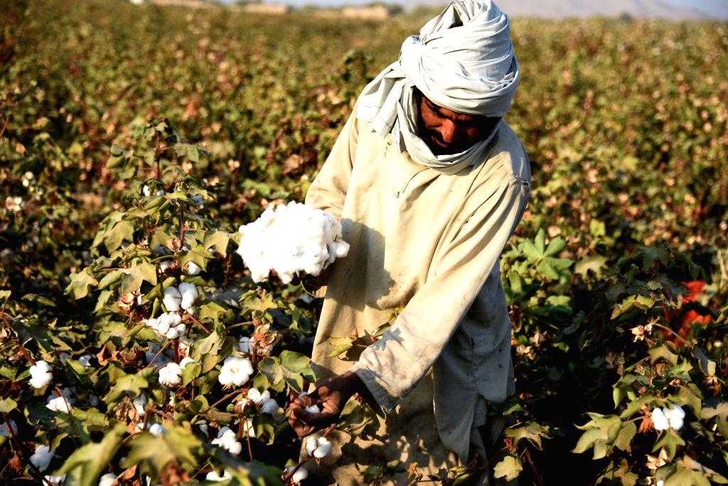 Afghanistan has over 2.5mn drug users: Govt