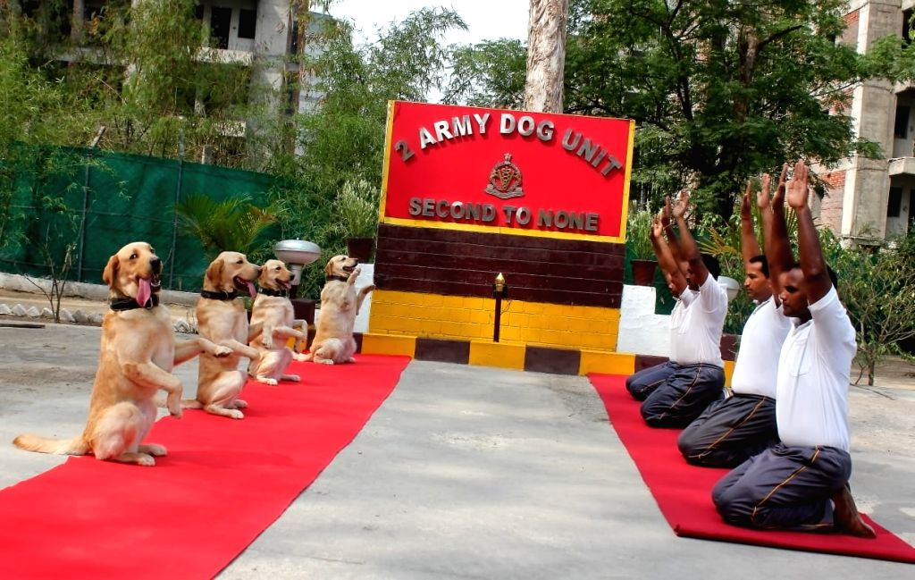 Agartala: Indian Army Dog Unit trainers along with their dogs practice yoga asanas -postures- on International Yoga Day 2019 in Agartala on June 21, 2019. (Photo: IANS)