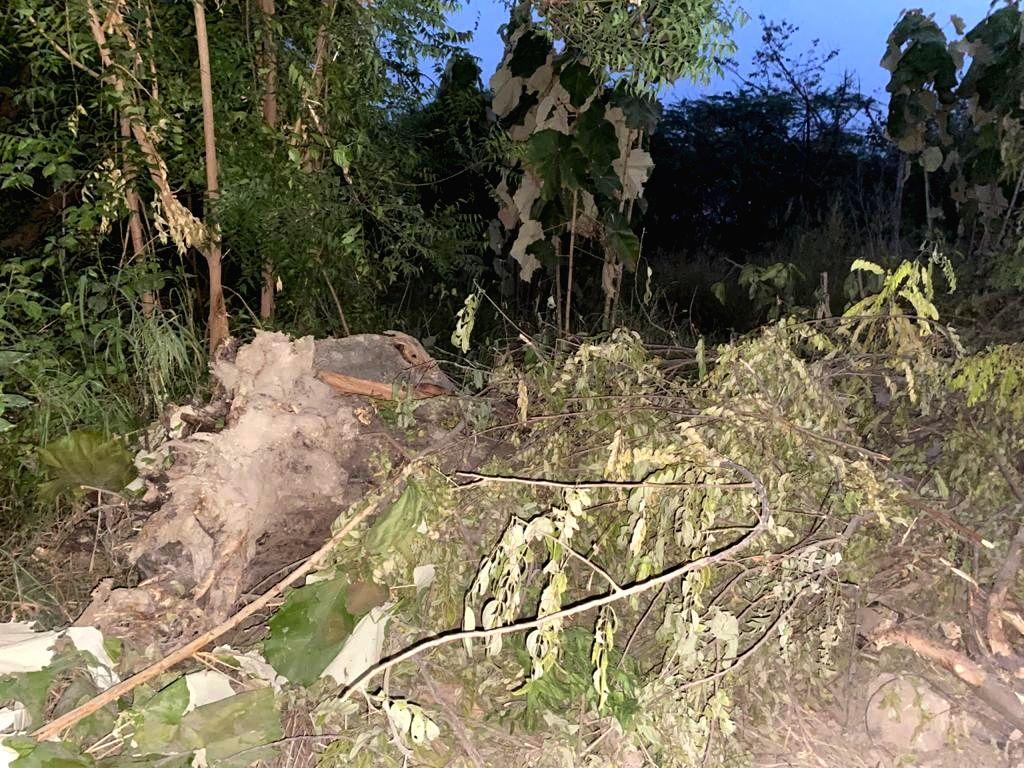 Agra, trees chopped.