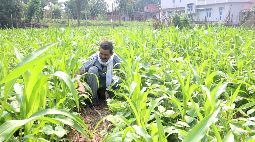 Agriculture sans chemicals is giving Himachal farmers better and sustainable incomes.