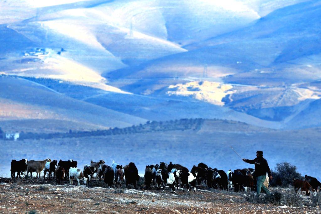 AJLOUN (JORDAN), Dec. 4, 2018 A Jordanian shepherd herds a flock of goats in Ajloun, north of Amman, Jordan, on Dec. 4, 2018.