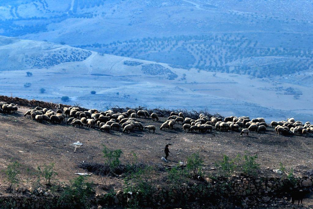 AJLOUN (JORDAN), Dec. 4, 2018 A Jordanian shepherd herds a flock of sheep in Ajloun, north of Amman, Jordan, on Dec. 4, 2018.