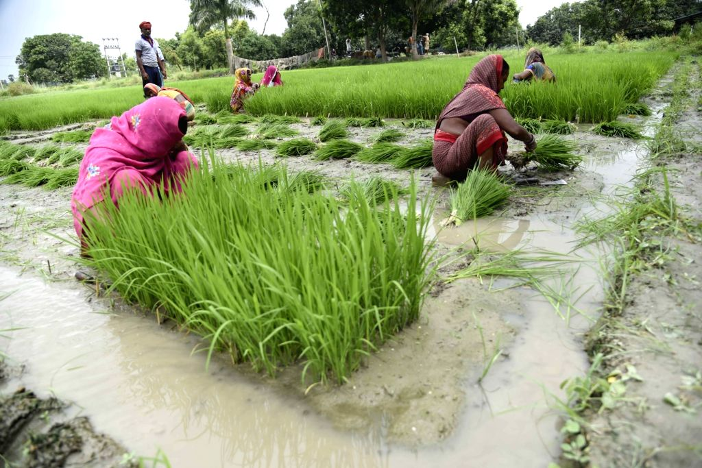 All states allowed to begin paddy procurement: Food Ministry. (Photo: IANS)