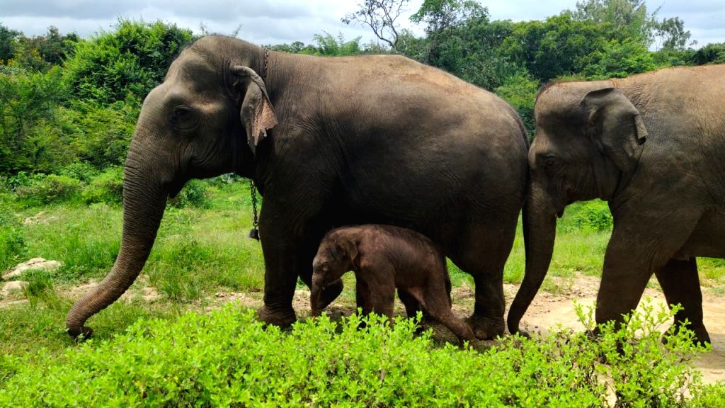 Amid covid gloom, elephant calf birth spreads cheer in B???luru Zoo