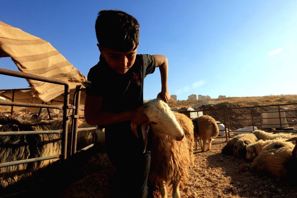 AMMAN, Aug. 9, 2019 - A sheep seller waits for customers ahead of Eid al-Adha festival in Amman, Jordan, on Aug. 9, 2019.