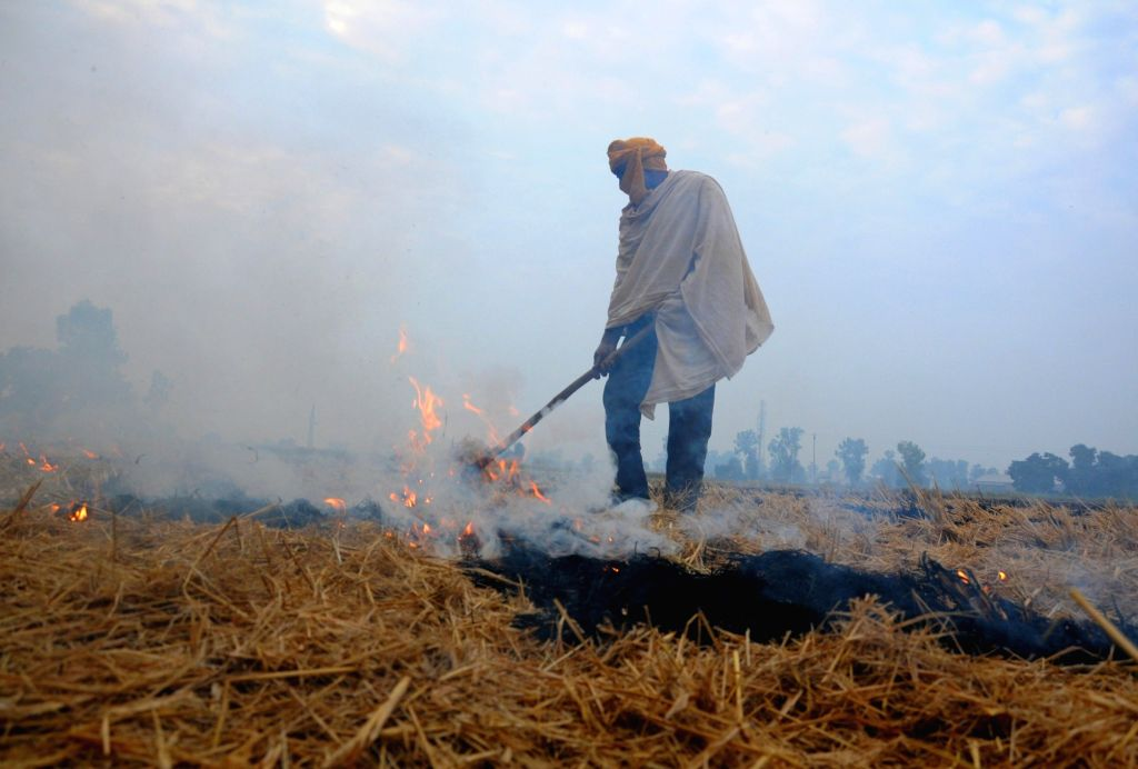 Amritsar: A farmer burns paddy stubble at an agricultural field on the outskirts of Amritsar on Nov 11, 2018. (Photo: IANS)