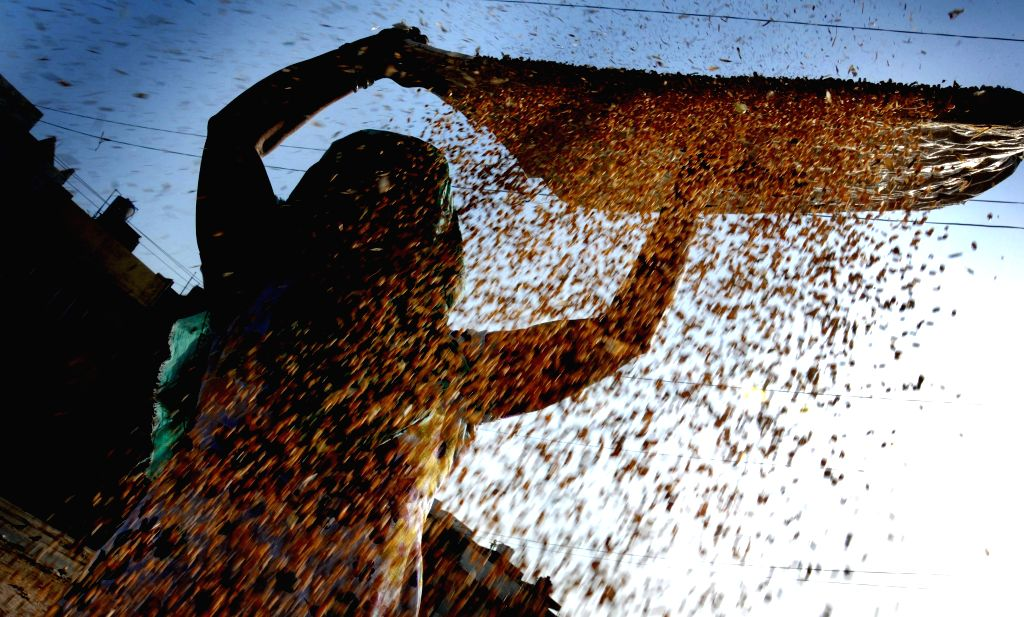 A farmer sifts wheat at a grain market in Amritsar on April 25, 2015.