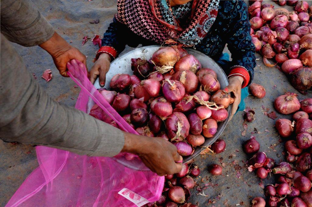Amritsar: A vendor sorts onions for sale at a roadside in Amritsar on Saturday on Saturday 27th February, 2021.(Photo: Pawan Sharma/IANS) - Pawan Sharma