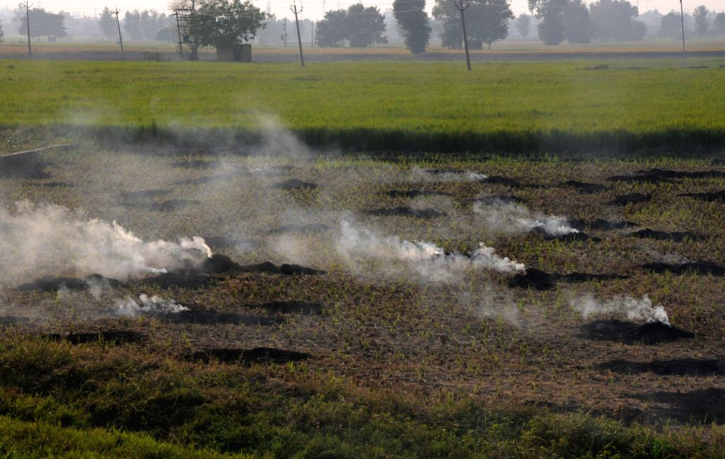 : Amritsar: Paddy stubble being burnt in a field on the outskirts of Amritsar, on Oct 12, 2018. (Photo: IANS).