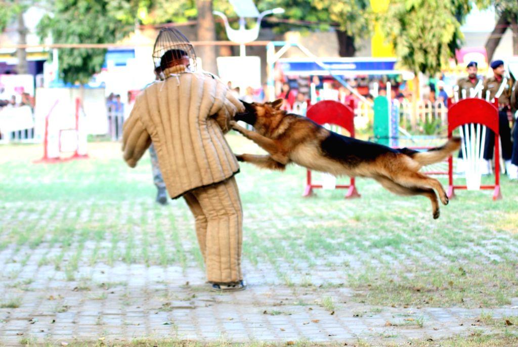 An army dog displays its skills during a dog show at India International Trade Fair(IITF) - 2015 at Pragati Maidan in New Delhi, on Nov 16, 2015.