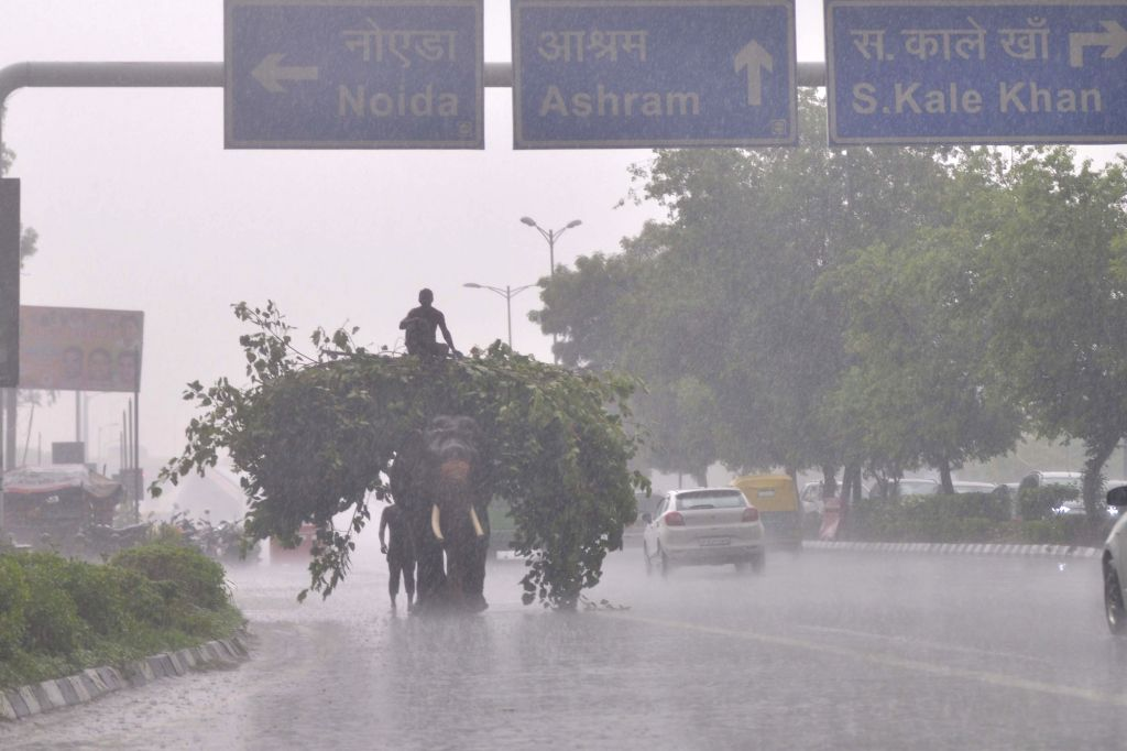 An elephant carries branches and leaves on a rainy day, in New Delhi, on July 20, 2018.