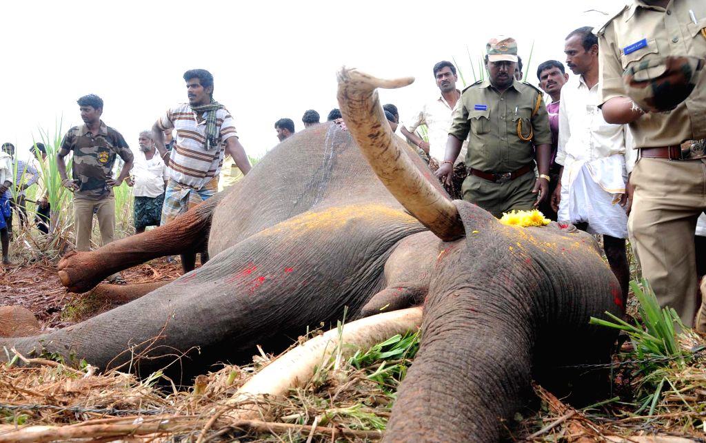 An elephant found dead with gunshot wounds at Nanjangud near Mysuru, on Jan 18, 2016.